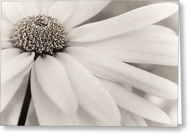 Greeting Card featuring the photograph Creme Fraiche In Black And White by Darlene Kwiatkowski