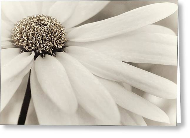 Greeting Card featuring the photograph Creme Fraiche In Gold And White by Darlene Kwiatkowski