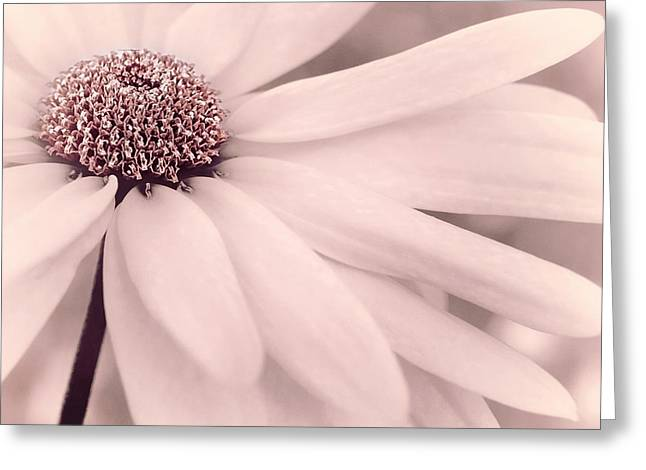 Greeting Card featuring the photograph Creme Fraiche With Hint Of Pink by Darlene Kwiatkowski