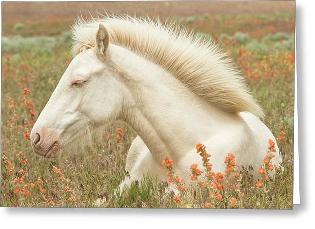 Cremello Beauty Greeting Card