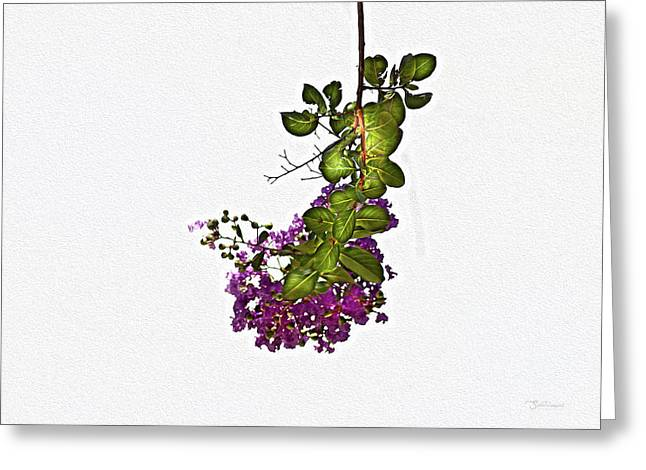 Crepe Myrtle In Oil Greeting Card