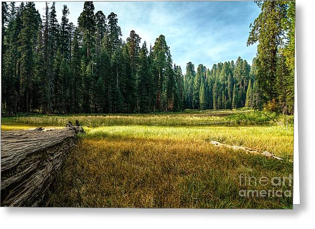Crescent Meadows Sequoia Np Greeting Card