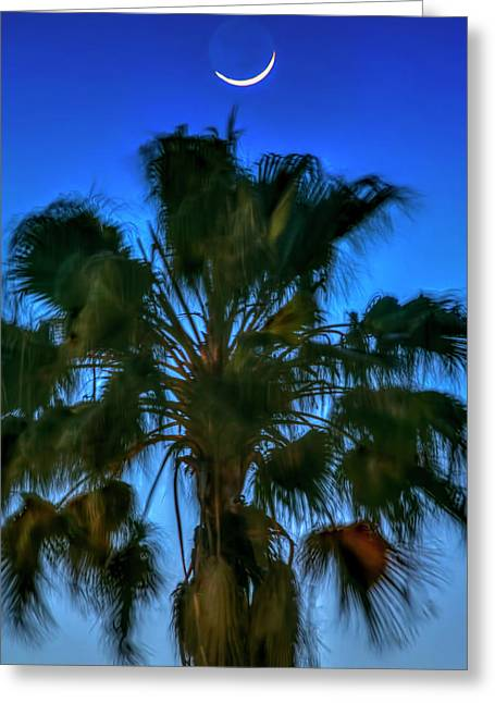 Crescent Over Palm Greeting Card by Marvin Spates