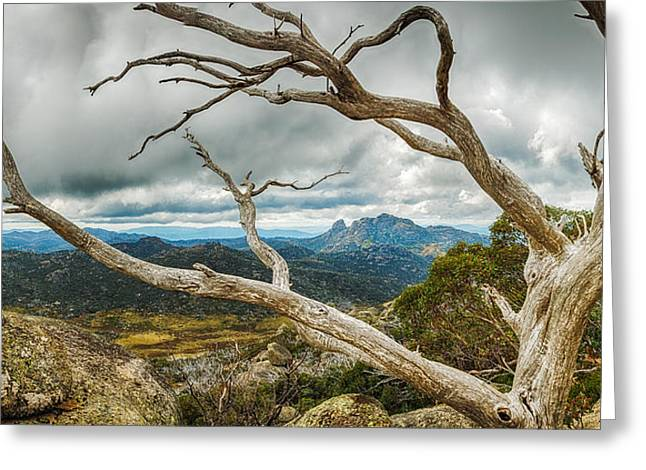 Cresta Valley - Mt Buffalo Greeting Card by Mark Lucey