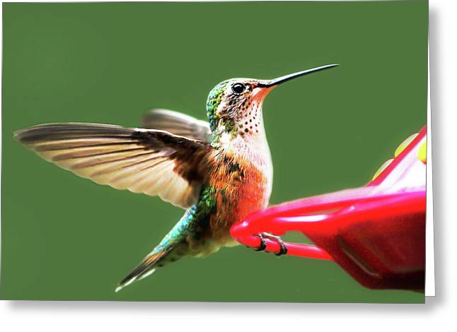Crested Butte Hummingbird Greeting Card