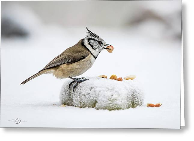 Crested Tit's Catch A Peanut Greeting Card