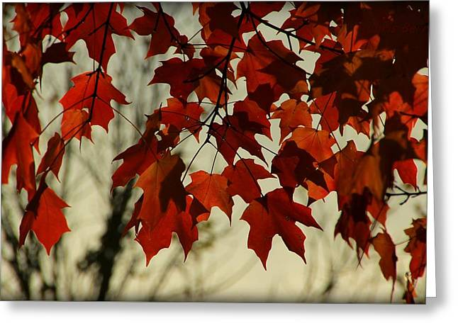 Greeting Card featuring the photograph Crimson Red Autumn Leaves by Chris Berry