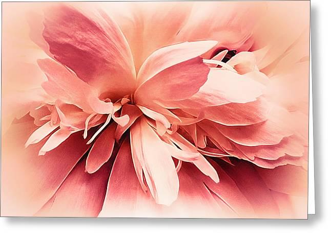 Greeting Card featuring the photograph Crimson Ballet Powder Puff by Darlene Kwiatkowski