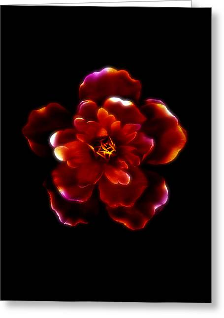 Crimson Bloom Greeting Card by Dolly Mohr