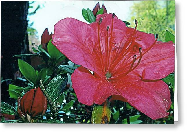 Greeting Card featuring the photograph Crimson by Larry Bishop
