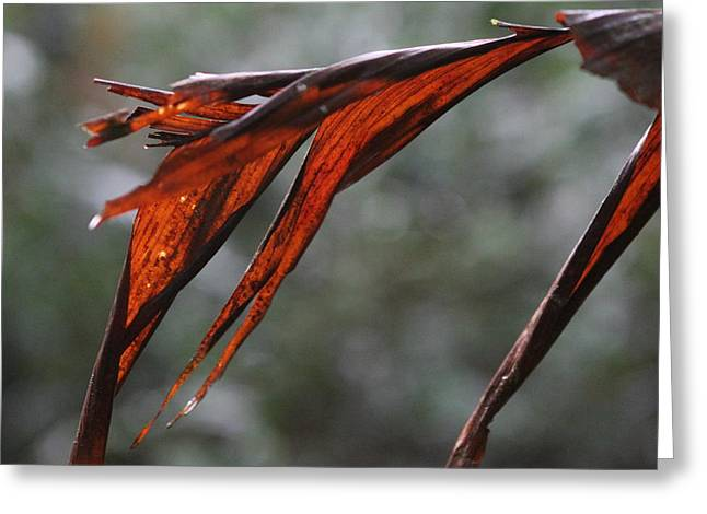Crimson Leaf In The Amazon Rainforest Greeting Card