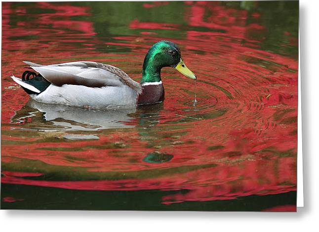 Greeting Card featuring the photograph Crimson Reflections by Elvira Butler