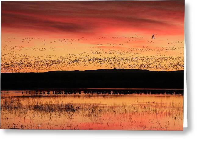 Crimson Sunset At Bosque Greeting Card
