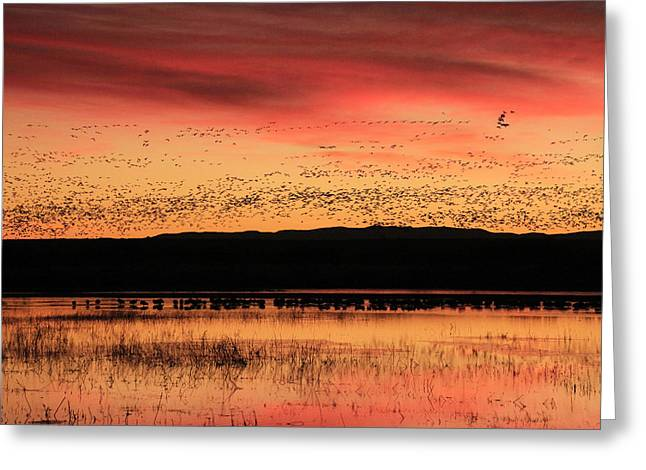 Crimson Sunset At Bosque Greeting Card