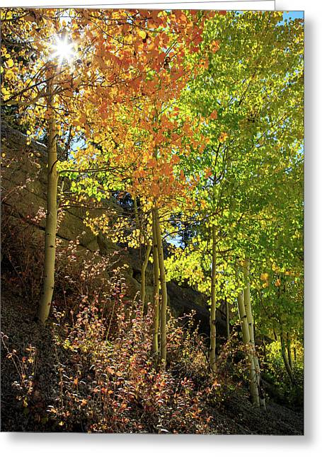 Greeting Card featuring the photograph Crisp by David Chandler