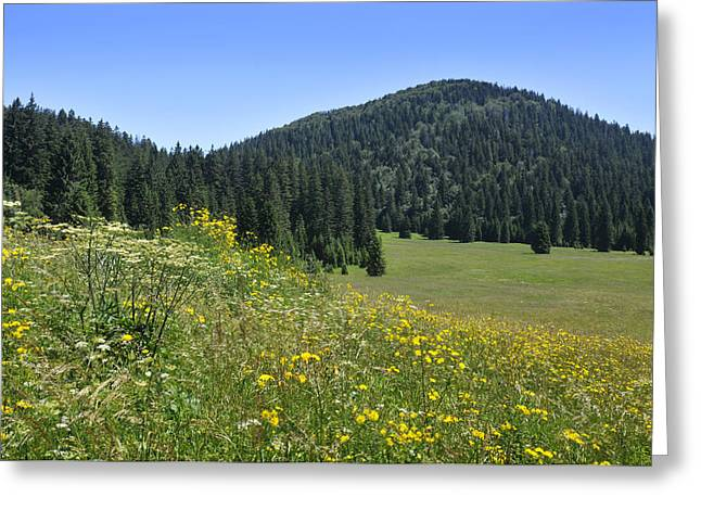 Croatian Meadow Greeting Card by Don Wolf