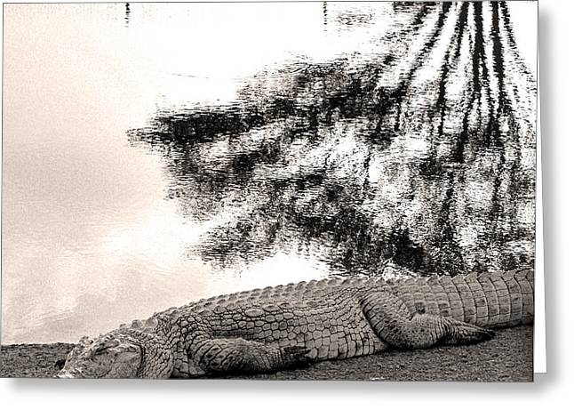 Crocodile Resting Time Greeting Card