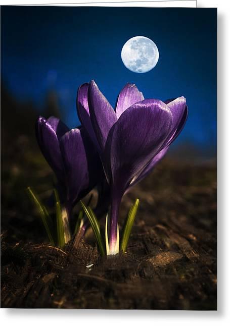 Crocus Moon Greeting Card