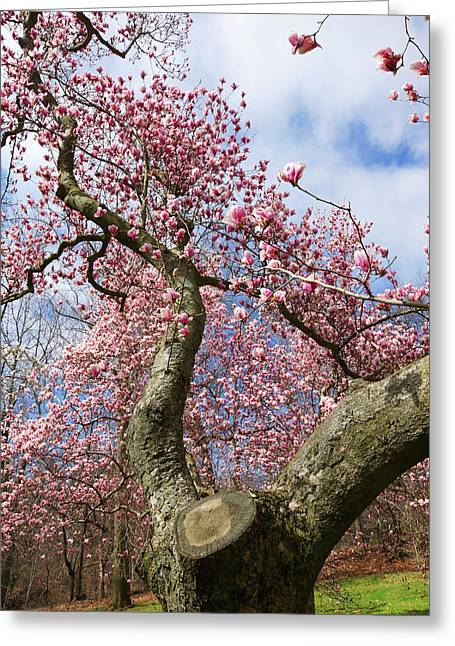 Crooked Magnolia Greeting Card