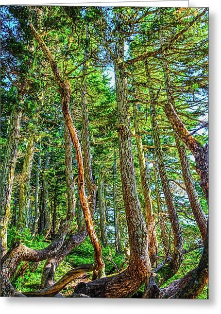 Crooked Trees Of Mt Roberts Greeting Card