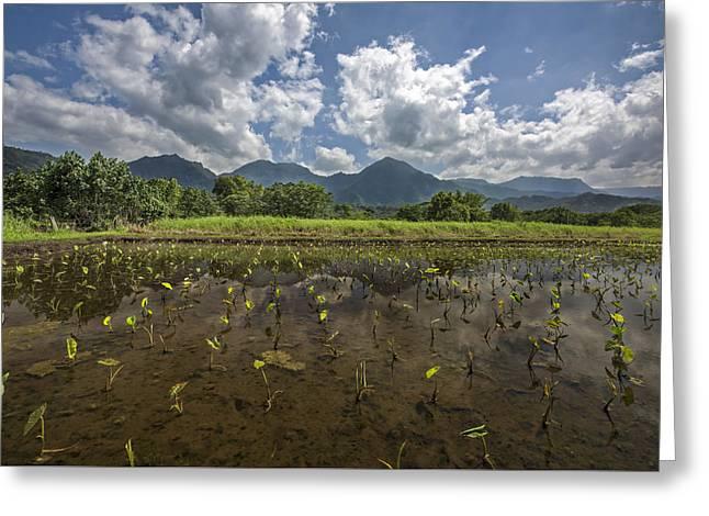 Crops On Kauai Greeting Card by Jon Glaser