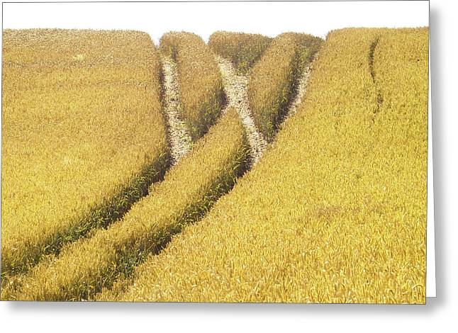 Cornfield Greeting Cards - Crossed Lanes on Cornfield Greeting Card by Heiko Koehrer-Wagner