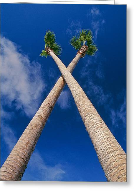 Crossed Palm Trees Greeting Card by Rich Iwasaki