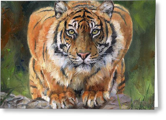 Crouching Tiger Greeting Card by David Stribbling