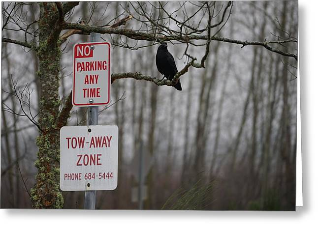 Crow Asking For A Citation In Magnuson Park In Seattle Greeting Card by Shirley Stevenson Wallis
