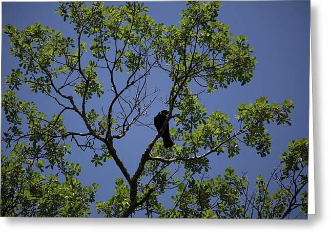 Crow Greeting Card by Brandy McKnight