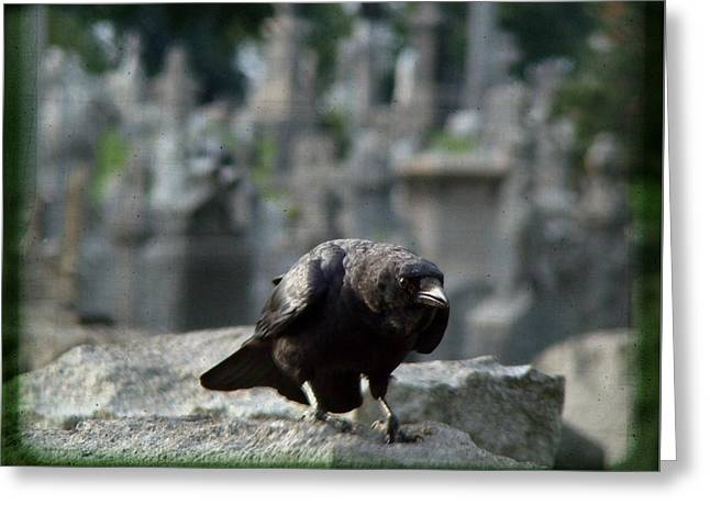 Crow In The City Of Stone Greeting Card