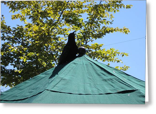 Crow On An Umbrella Greeting Card