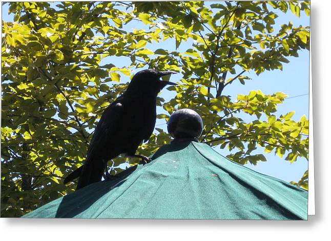 Crow On An Umbrella With Food Greeting Card