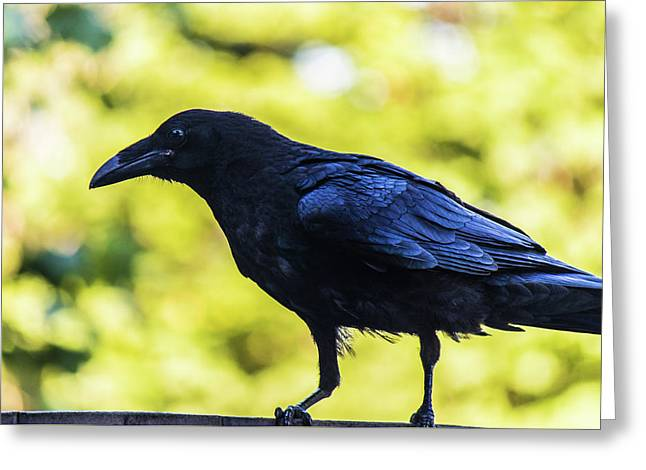 Greeting Card featuring the photograph Crow Perched by Jonny D