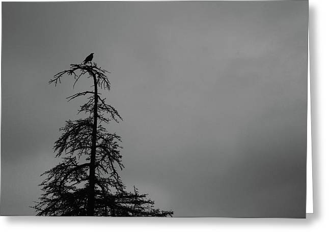 Crow Perched On Tree Top - Black And White Greeting Card
