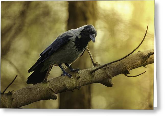 Crow Sitting On The Branch. Greeting Card