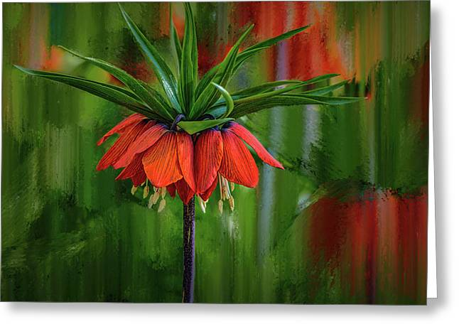 Crown-imperial Abstract #h5 Greeting Card