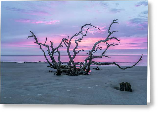 Crown Of Thorns Greeting Card by Jon Glaser