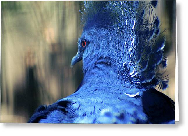 Crowned Pigeon Greeting Card by Terry Cork