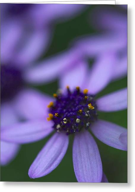 Crowned With Purple Greeting Card