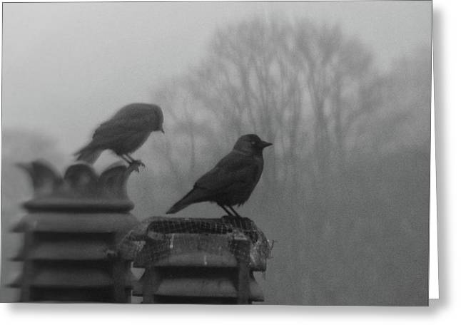 Crows On Chimney Tops Greeting Card by Philip Openshaw