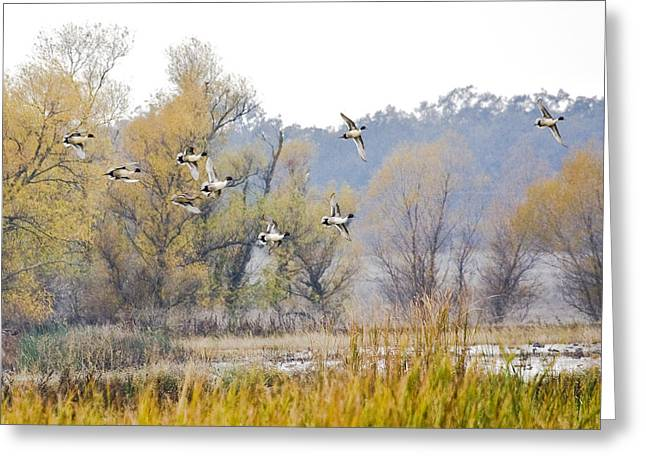 Cruising The Pond Greeting Card by Charlie Osborn
