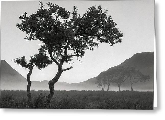 Crummock Water Tree Greeting Card by Dave Bowman