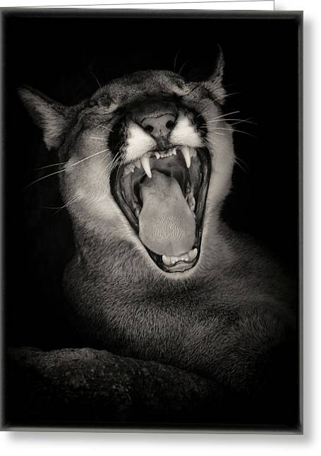Cruz Yawning Greeting Card