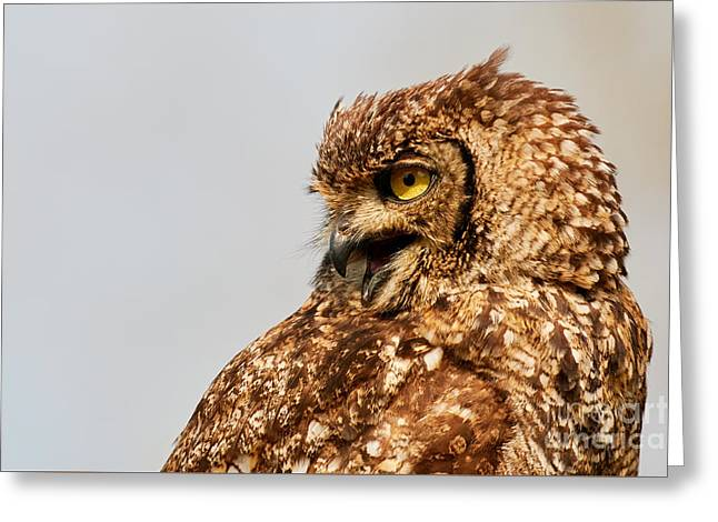 Crying Spotted Eagle-owl  Greeting Card by Nick Biemans