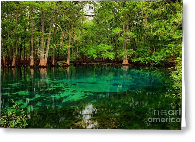 Crystal Blue Manatee Spring Waters Greeting Card by Adam Jewell