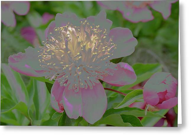 Crystalline Flower Greeting Card