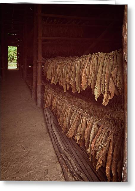 Greeting Card featuring the photograph Cuban Tobacco Shed by Joan Carroll