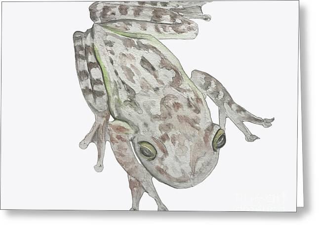 Cuban Treefrog Greeting Card