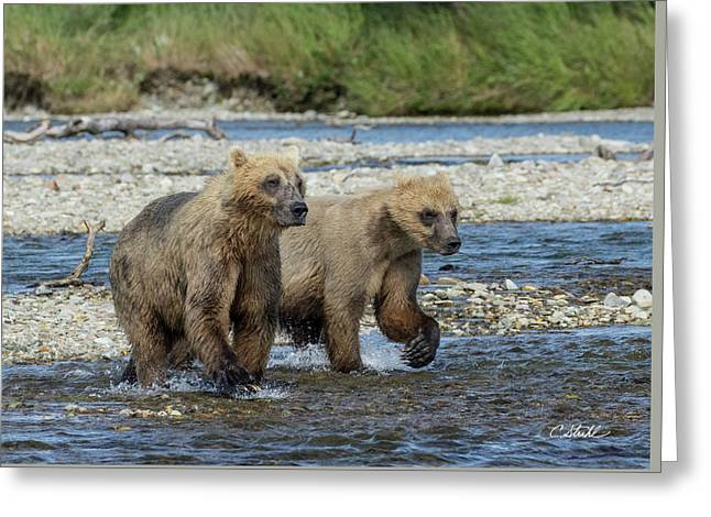 Cubs On The Prowl Greeting Card